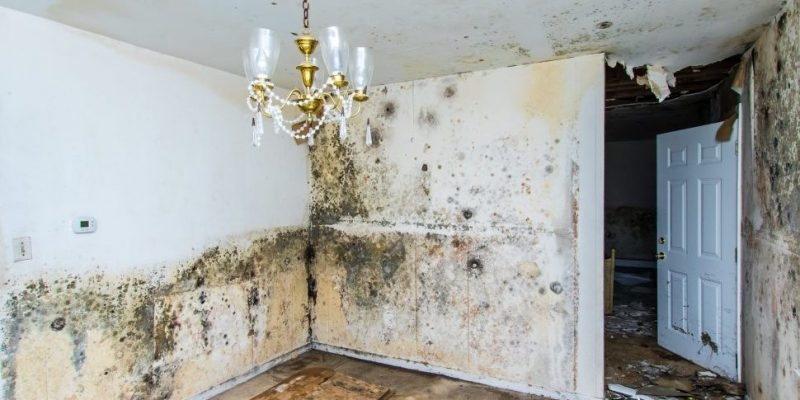 Pittsburgh Mold Inspection